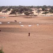 Du Sénégal à Djibouti, une Grande Muraille verte contre la désertification