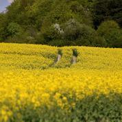 Dans les champs, des insectes plutôt que des insecticides