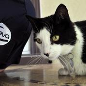 Le vétérinaire Ceva se renforce dans les vaccins sur mesure