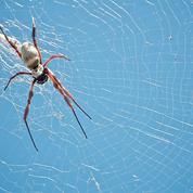 Les araignées inspirent une nouvelle sorte de filament