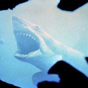 Les Dents de la Mer les pieds dans l'eau? C'est possible...