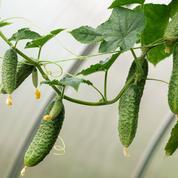 CRISPR/Cas9, la révolution qui supplanteles OGM