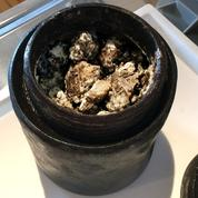 Un fromage vieux de 340 ans découvert dans une épave suédoise