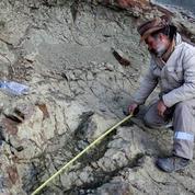 Bolivie : découverte d'une gigantesque empreinte de dinosaure carnivore