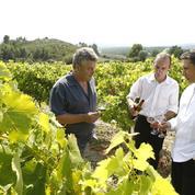 Vins espagnols: les producteurs du Languedoc crient à la concurrence déloyale