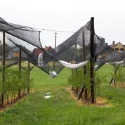 Agroalimentaire: l'idée d'une TVA climatique