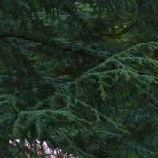 À Varangeville, sous les charmes du Bois des Moutiers
