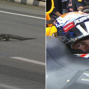 Quand Max Verstappen rencontre «un lézard géant» sur le circuit de Singapour