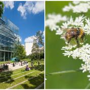 Fondation Cartier: un «jardin nature» en plein Paris
