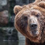 À quoi servent les ours ?