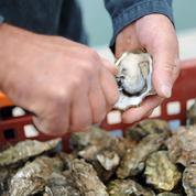 L'entreprise Flex Sense invente l'anti-vol pour les huîtres