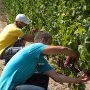 Le vin bio crée 50% d'emplois en plus que le vignoble classique