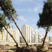 Pollution, canicule... les arbres soignent les villes