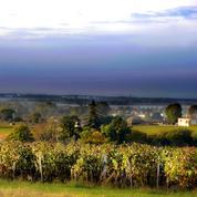 Vin de Bordeaux «trafiqué»: amende record pour un viticulteur