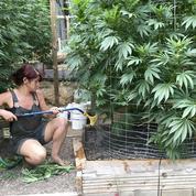 Aux États-Unis, la légalisation du cannabis a remporté une victoire