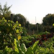 Il cultive des plantes disparues grâce à des graines retrouvées…à Saint-Pétersbourg !