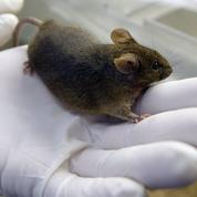 Une Américaine trouve une souris morte dans l'ourlet de sa robe Zara