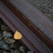 Retards, annulations: la SNCF face au fléau des feuilles mortes