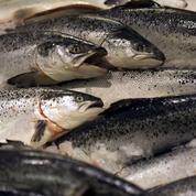 Le saumon bio plus toxique que le non bio