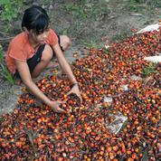 Huile de palme : travail forcé, enfants exploités... Amnesty tire la sonnette d'alarme