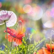 Préparez une «couche chaude» pour le printemps
