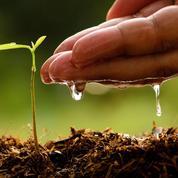 Compost: l'arrosage accélère-t-il la fermentation ?