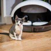 Une gamelle connectée pour empêcher l'obésité des chats