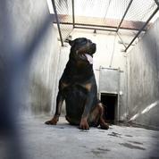 Aisne : un bébé de 14 mois tué par le rottweiler de sa famille