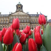 À Amsterdam, le plus grand jardin de tulipes du monde