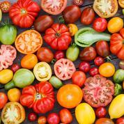Tomate: la qualité gustative est aussi une affaire de culture
