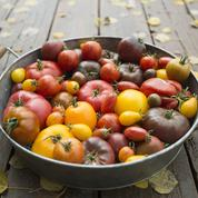 Comment redonner leur goût aux tomates