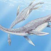 Un fossile de dinosaure «unique au monde» découvert en Colombie