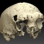 Un crâne de 400.000 ans découvert au Portugal