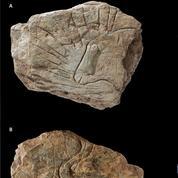 Incroyable découverte préhistorique à Plougastel-Daoulas