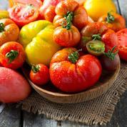 Tomates, salades: semez des variétés résistantes aux maladies