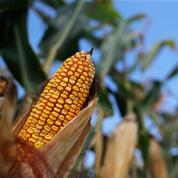 Les Mexicains menacent de ne plus acheter de maïs aux Américains