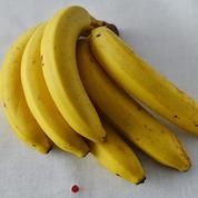 Les fausses bananes bios dans le viseur des producteurs européens