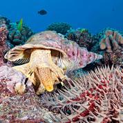 Pourquoi l'année 2017 est cruciale pour la sauvegarde des océans