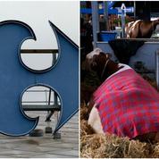 Carrefour veut garantir le «bien-être animal»