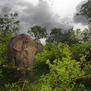 Unesco : braconnage et trafic de bois menacent près de la moitié des sites naturels