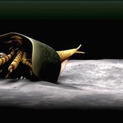 Un ancêtre des homards vieux de 507 millions d'années