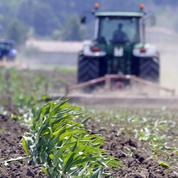 Les cultures OGM ont augmenté de 3% en 2016
