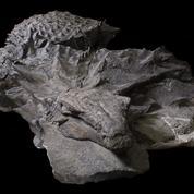 Un dinosaure cuirassé parfaitement conservé comme une statue
