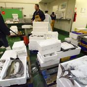 À Nice, le procès-fleuve de la mafia du poisson
