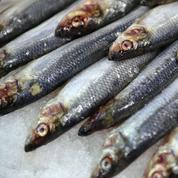 Un vaste système de fraude de ventes de poissons devant la justice