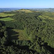La forêt et les terres agricoles, plus que jamais des valeurs refuges