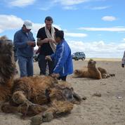 Brun de Vian-Tiran, du Vaucluse aux steppes de Mongolie