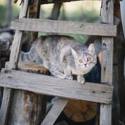 Le chat, 9000 ans de règne domestique
