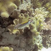 La Grande Barrière de corail estimée à 37 milliards d'euros