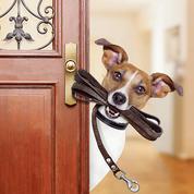 Aix-en-Provence est la ville où faire garder son chien l'été coûte le plus cher